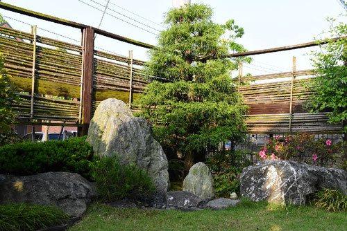 糸檜葉,いとひば,画像,庭