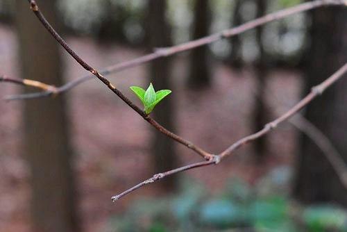 空木の新緑,画像