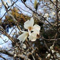 木の名前 白い花 名前