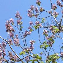 purple flowers blooming in Japan