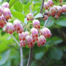 桃色の花 種類