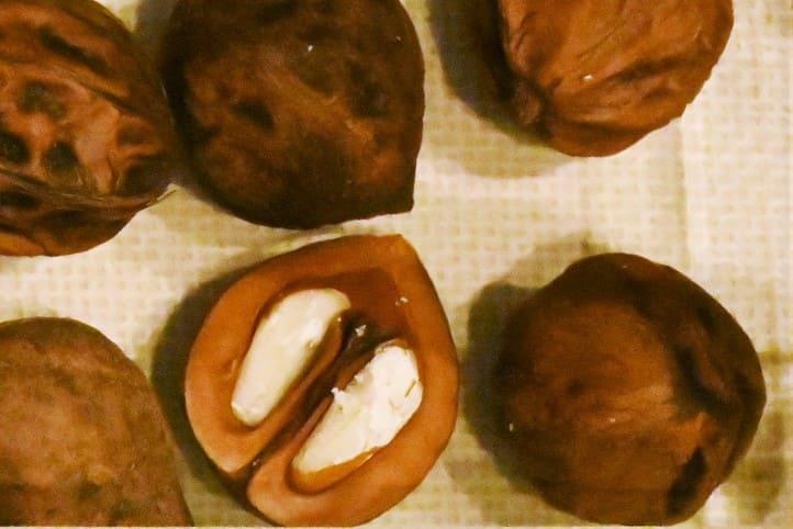 クルミの木 種類