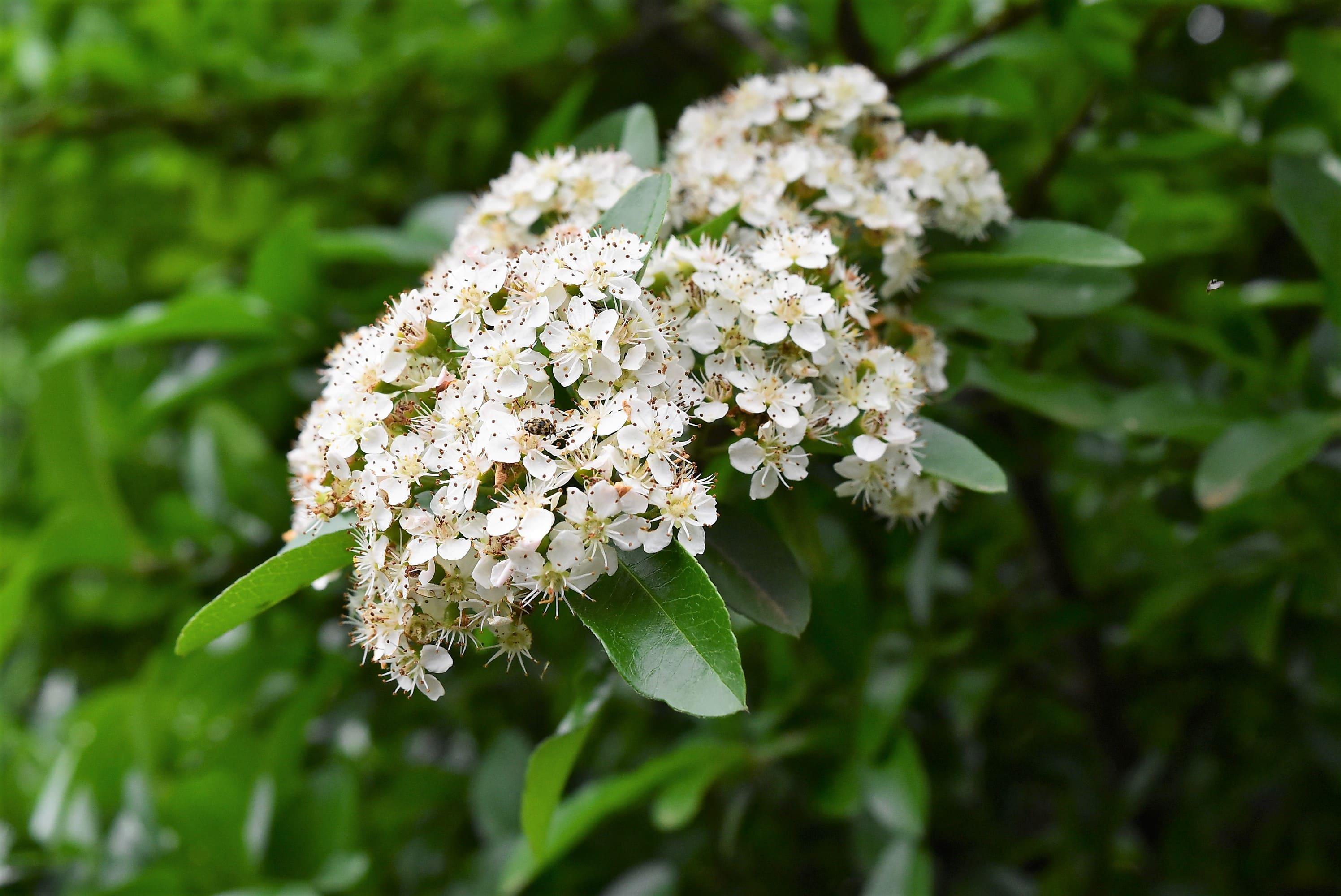 白い花 トゲ
