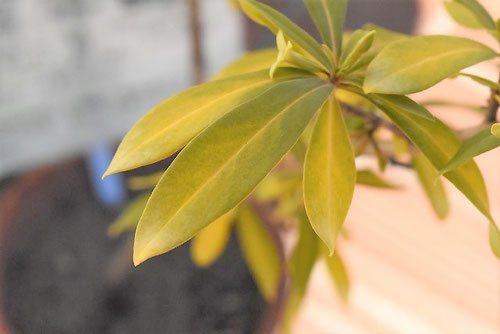 夏坊主 樹木