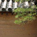 和風木,代表種,日本