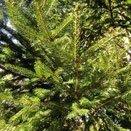 常緑針葉樹 庭木図鑑