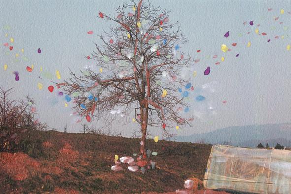 実家の畑の隣にある林檎の木