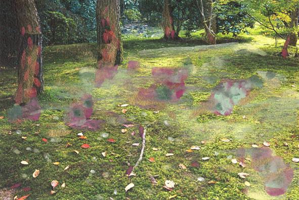 龍安寺の庭園