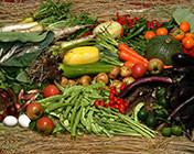 湯来町で採れた新鮮な地元野菜。豊富な食材をご用意。