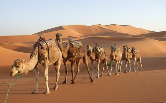 la caravane du désert