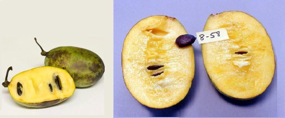 Wild fruit vs. Neal's fruit