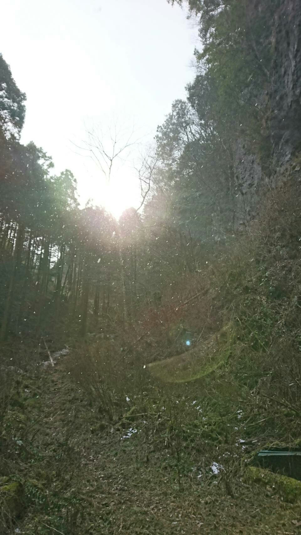 神社裏の森林