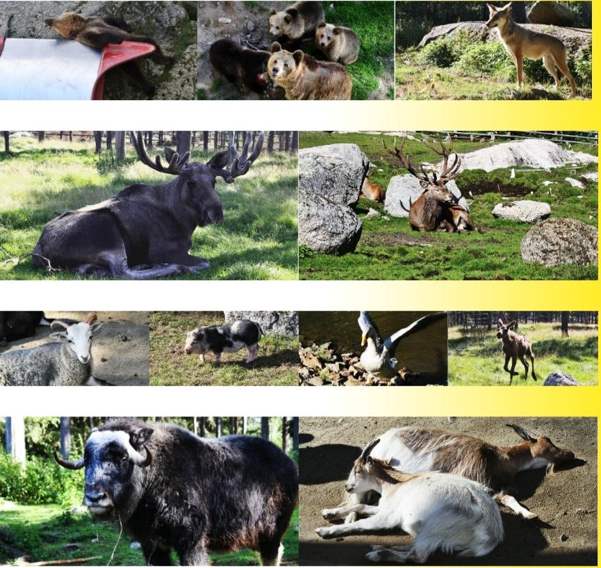 Tiere des Nordens
