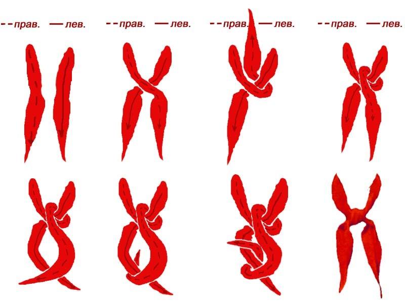 Схема завязывания галстука.