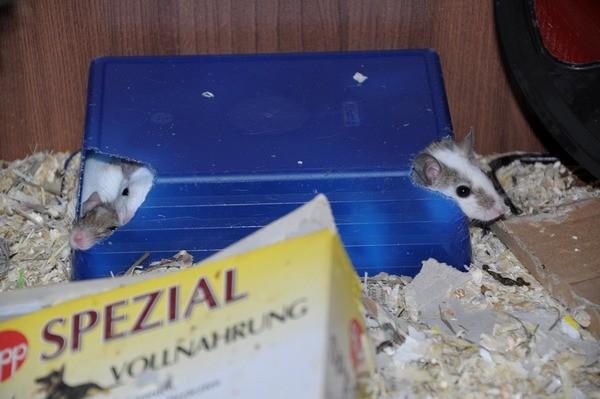 ein Traumhaus - zumindest für Mäuse