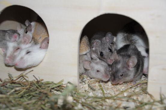 Vier Arten teilen sich ein Haus
