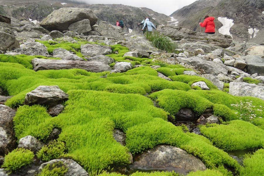 Sattes Grün im Karstigem Gelände