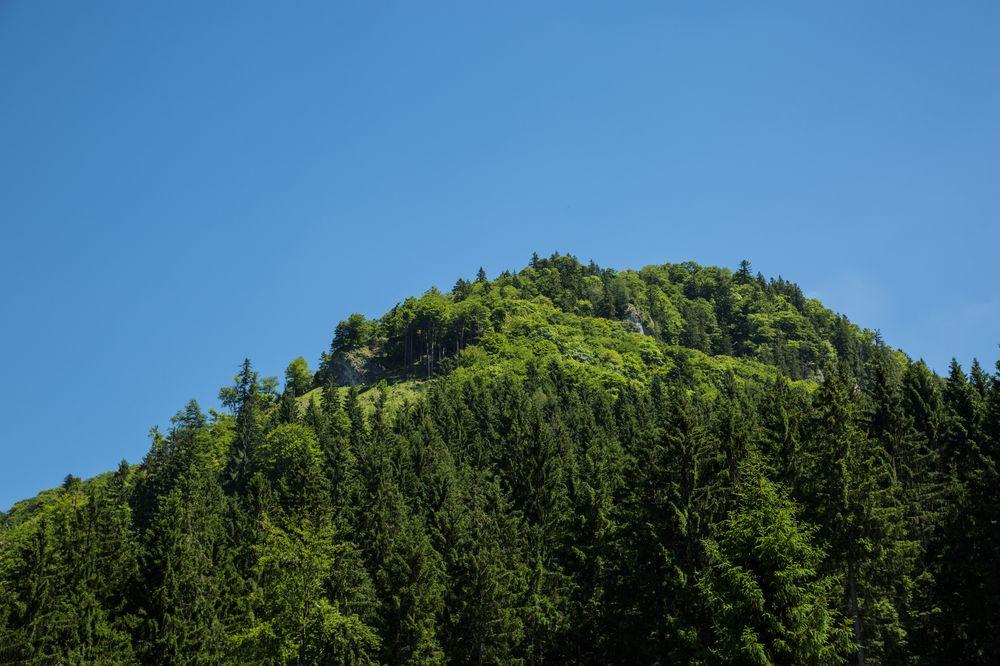 Unser Abstieg verlief durch den steilen Wald auf die Forststrasse