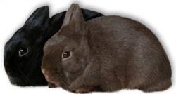 Pulsa sobre la foto si quieres mas informacion sobre estas razas de conejo