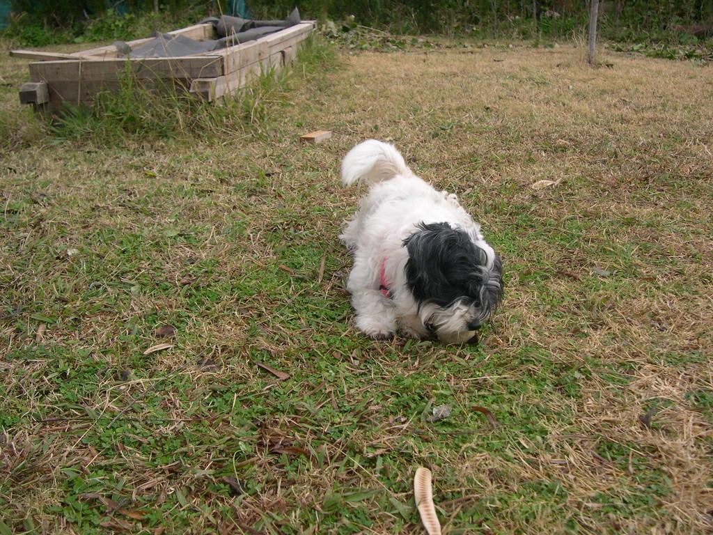 """La perra """"Xica"""" también esterilizada, nos la encotramos abandonada hace un año largo"""