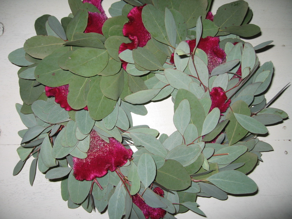 Euckalyptuskranz mit Cellousien