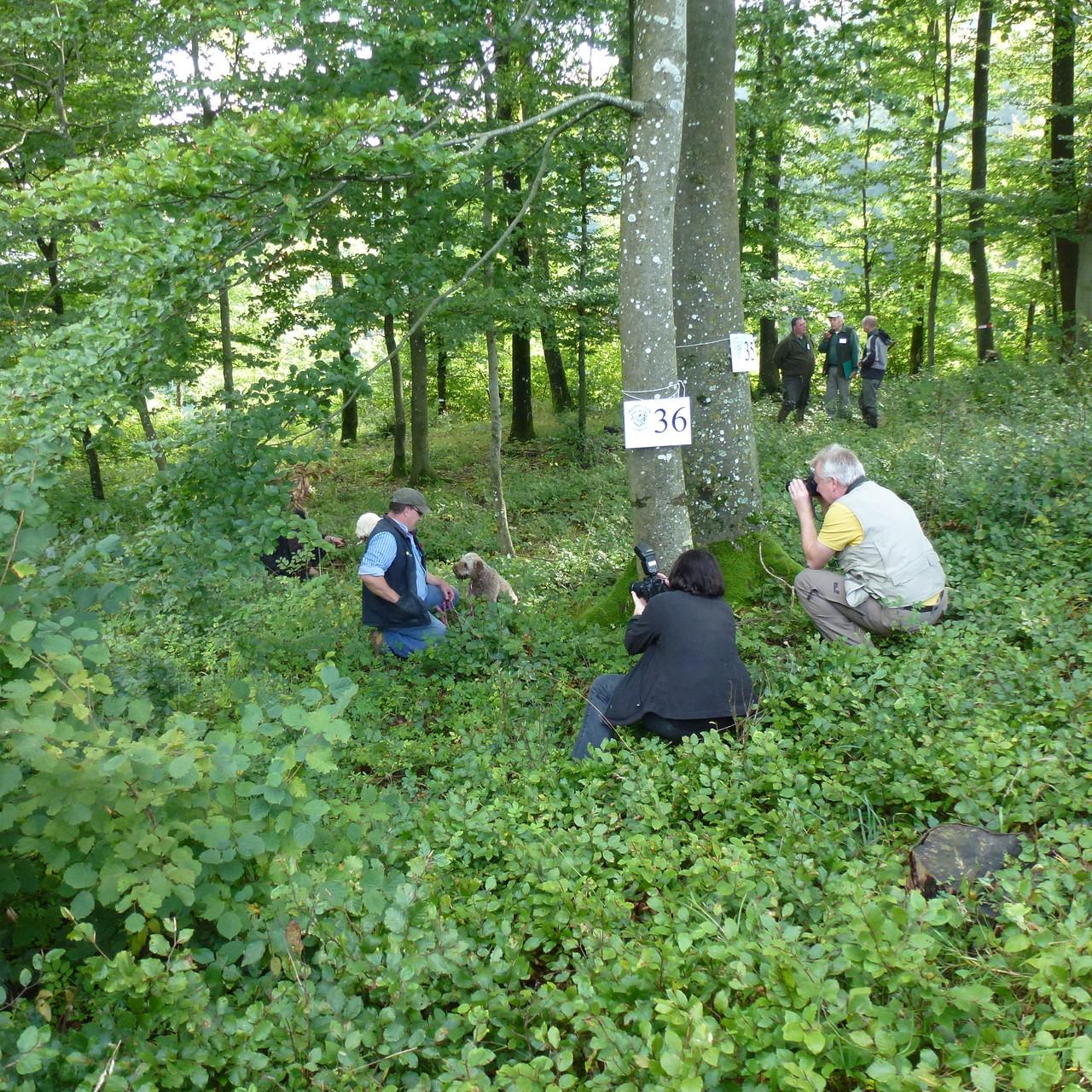 Finale an der Trüffelsuchprüfung in Gansingen 2012