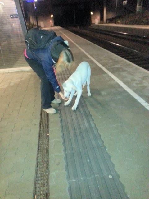 Auf dem Bahnhof lerne ich die Leitlinien kennen