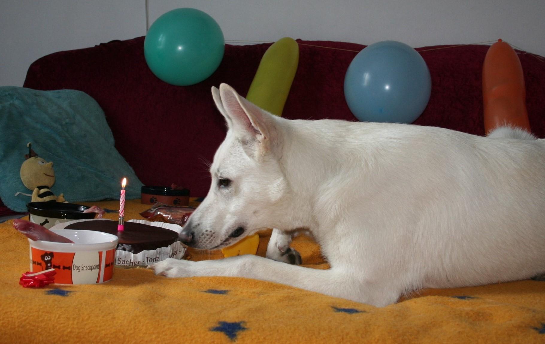 Ist die Torte für mich?