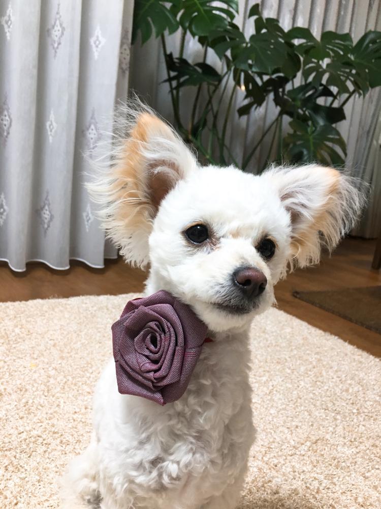 畳のヘリ薔薇も販売します!