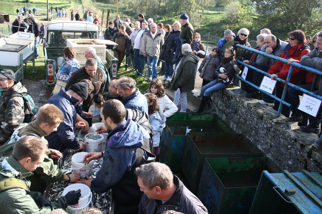 Les visiteurs assistent au tri de la pêche miraculeuse