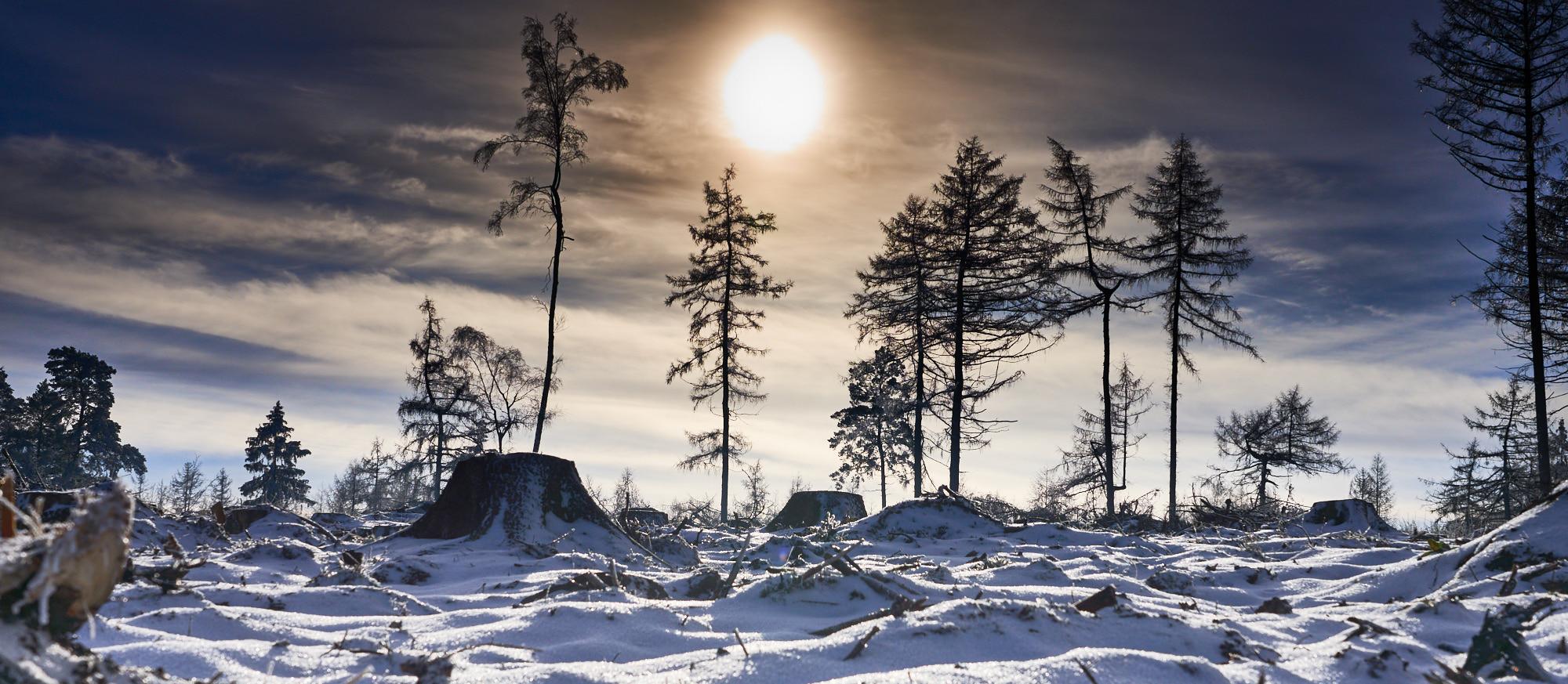 """Wettbewerb Februar 2021 """"Schnee"""""""