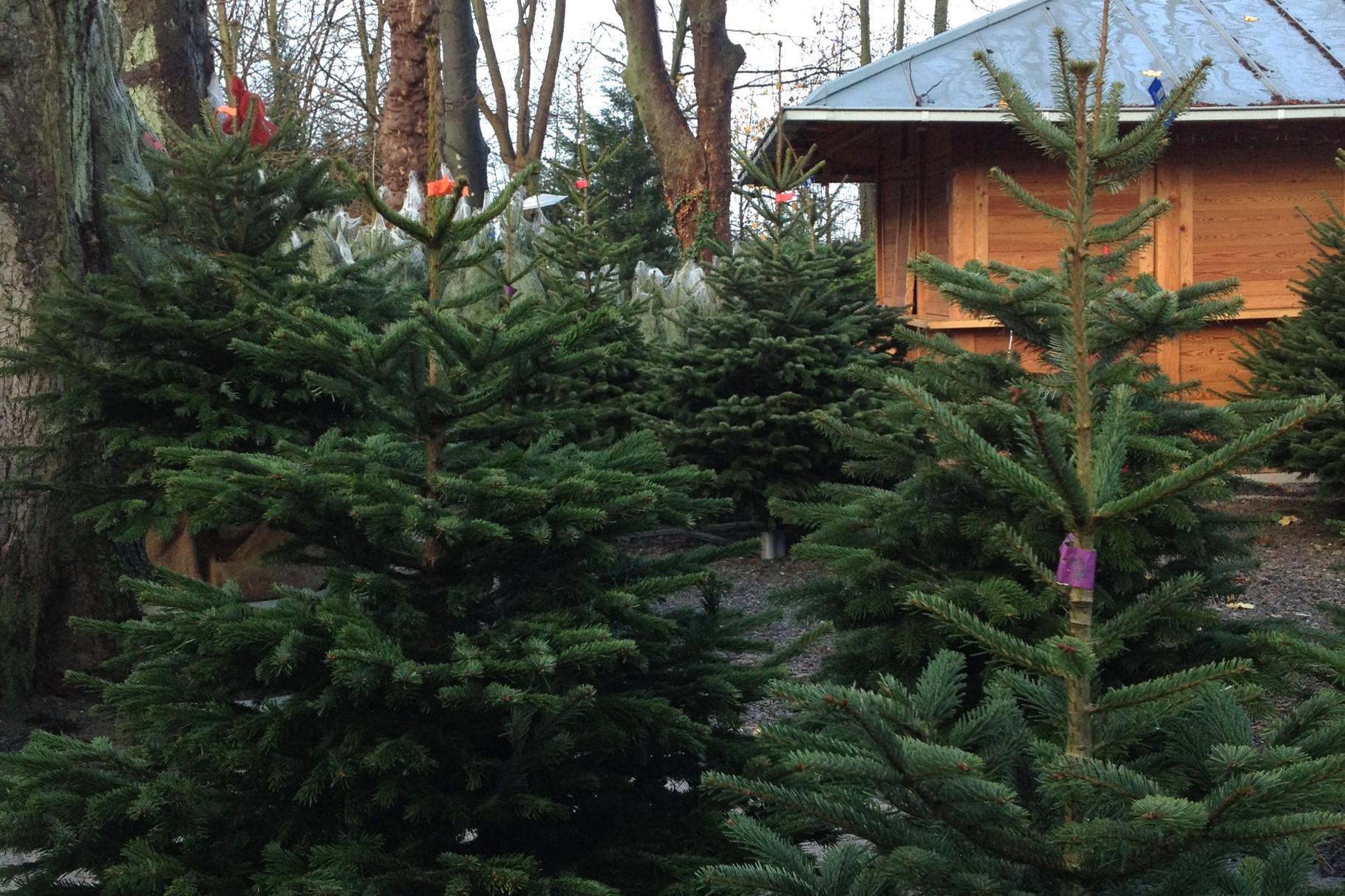 landhaus freemann kaiserswerth die sch nsten weihnachtsb ume im ruhrgebiet. Black Bedroom Furniture Sets. Home Design Ideas