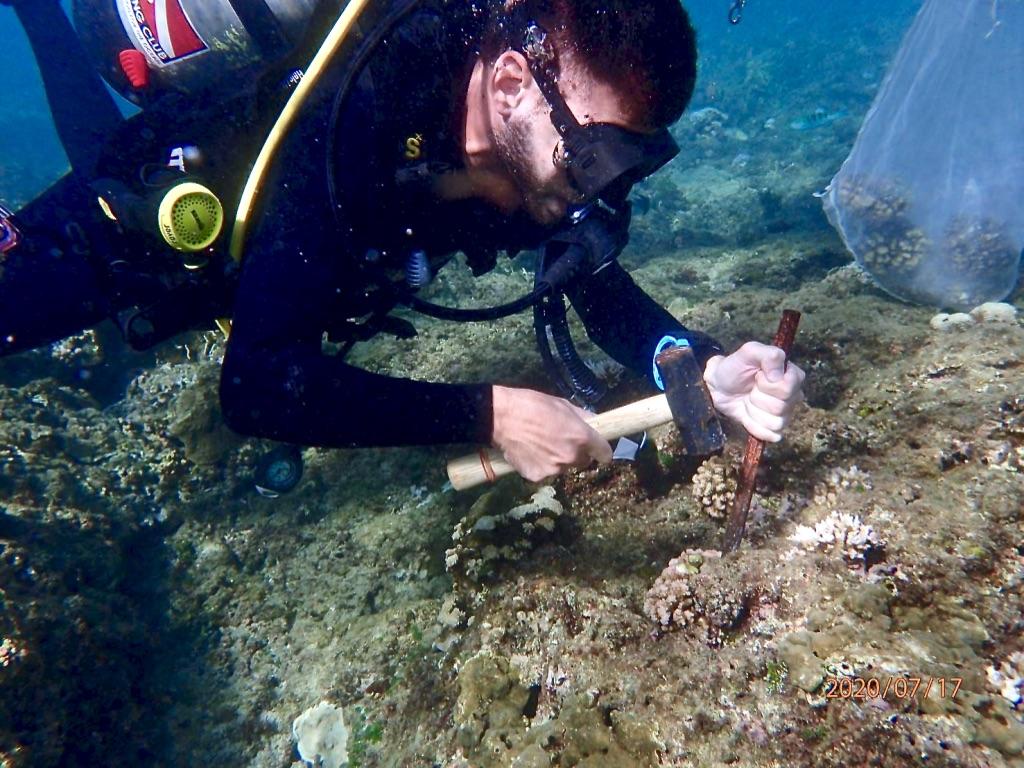 Vitrificazione e riscaldamento laser delle larve di corallo per salvare le barriere coralline