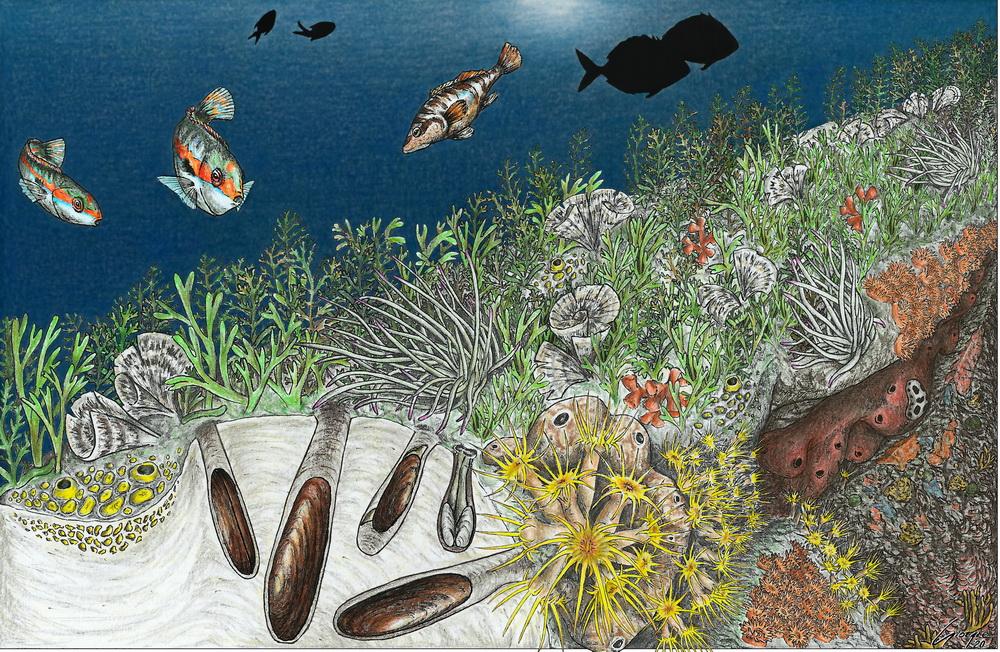 La pesca illegale del dattero di mare