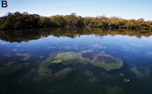 Acidificazione degli oceani: sono le spugne i potenziali vincitori