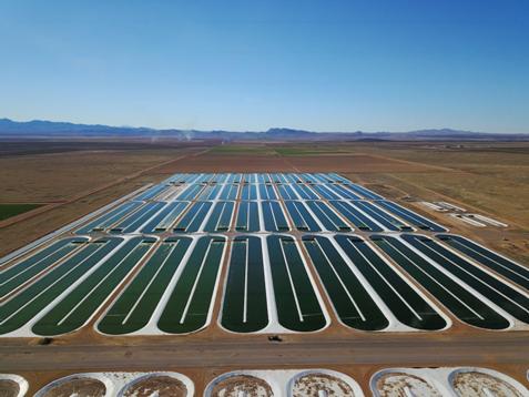 Cultivo de microalgas, Qualitas Health, Nuevo México EUA