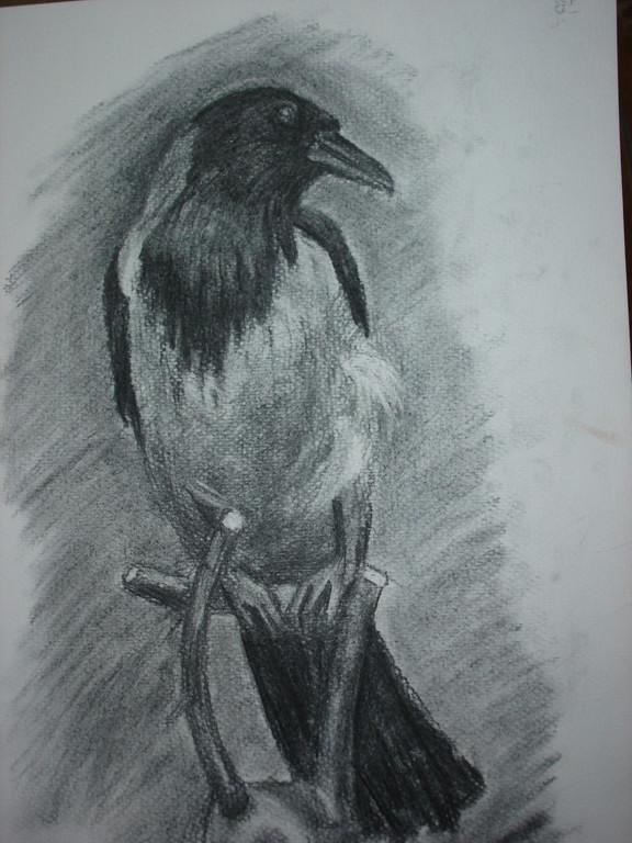 """""""Ворона"""". Учебная работа, уголь, бумага"""