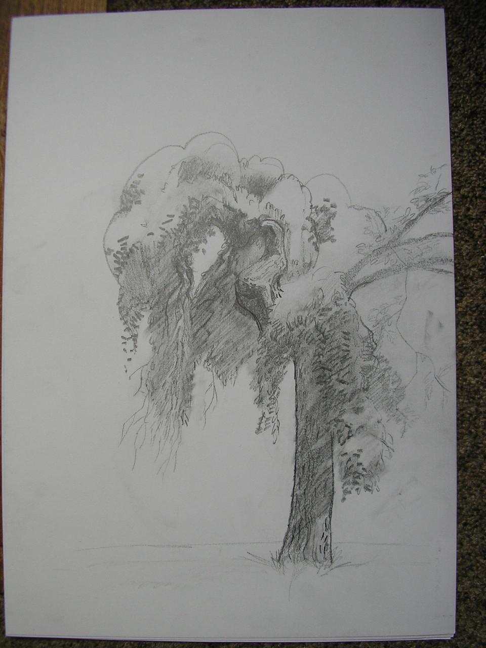 Дерево. Бумага, карандаш