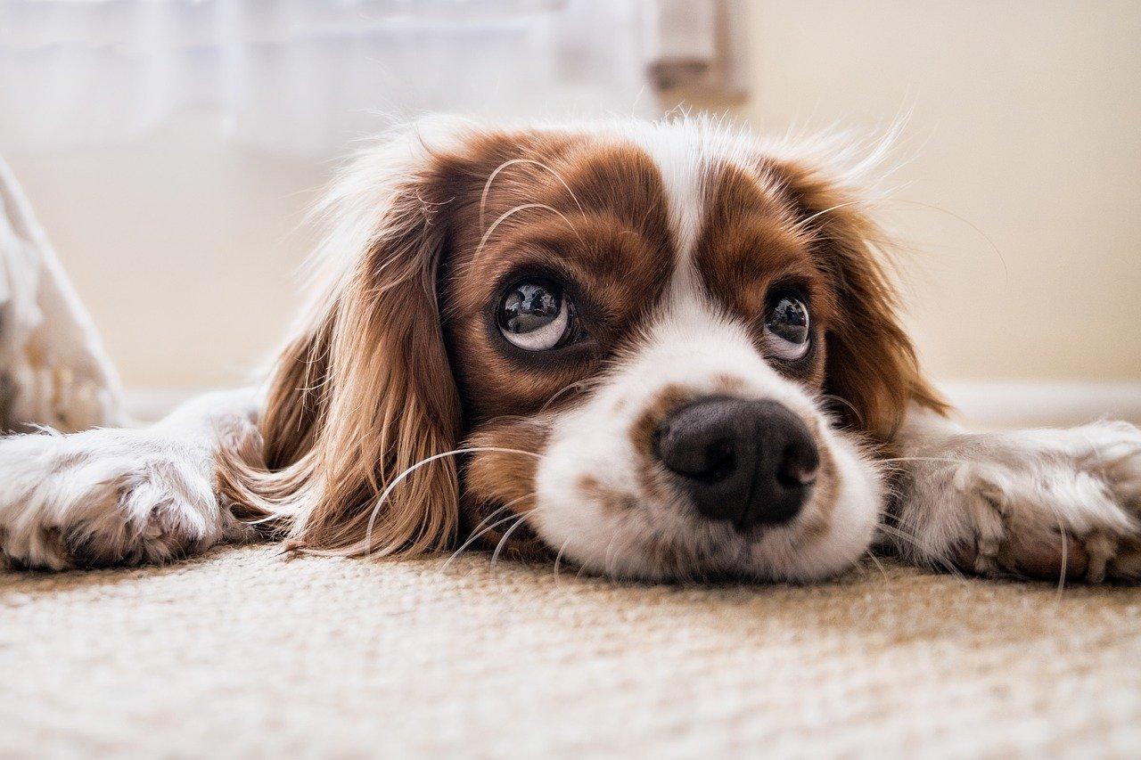 Vitalpilze bei Hunden