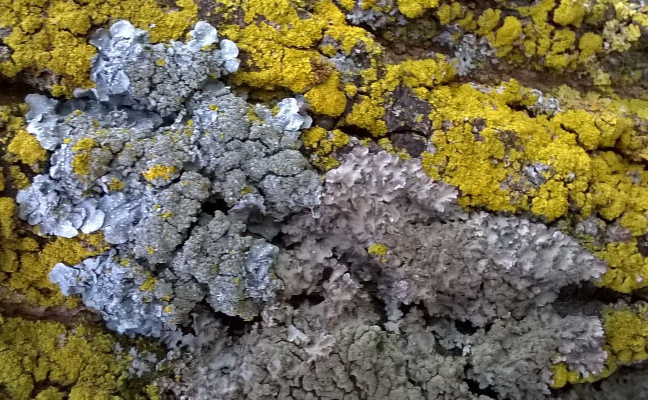 Mix licheni e colori  by Licheni in rete