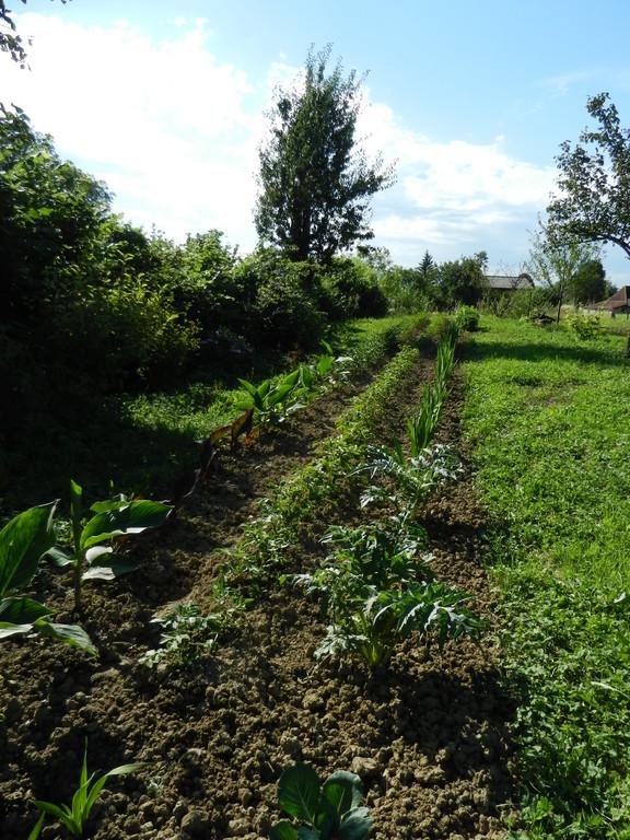 L e jardin de legumes