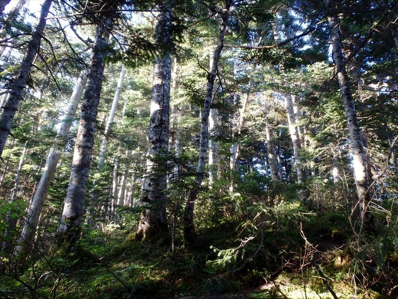 誰もいない森を歩く