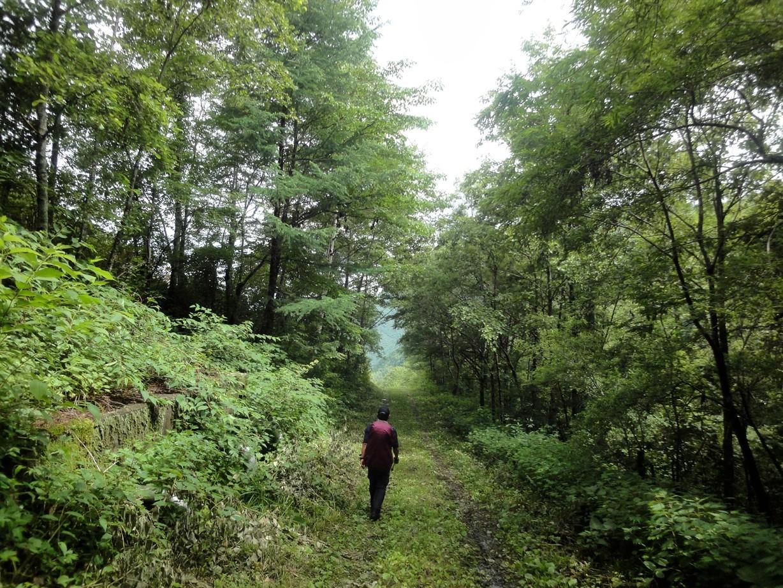 林道も緑いっぱい