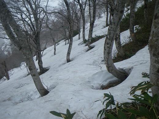 北側斜面には、こんなに雪がある場所も。