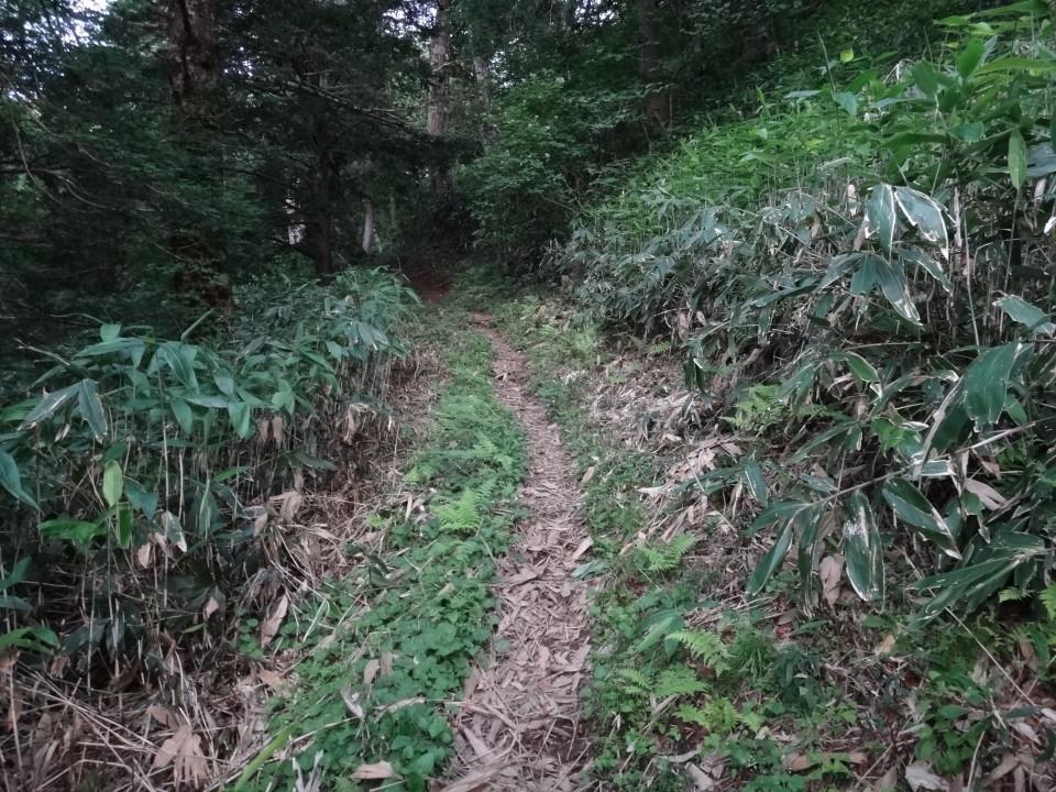 笹が刈り取られて歩きやすい