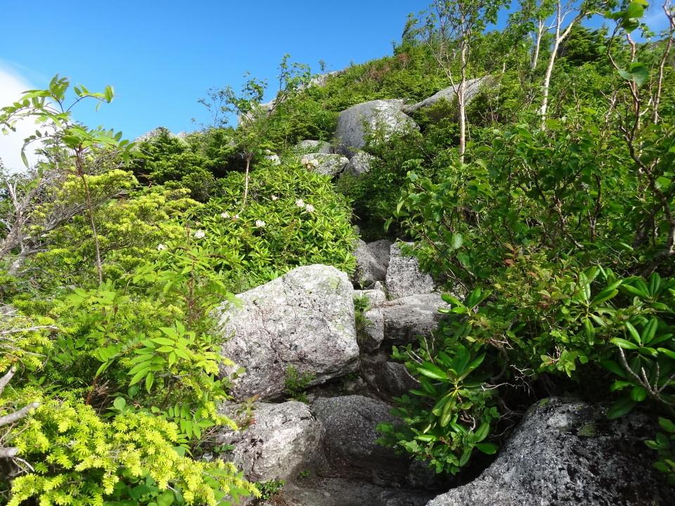 岩と木々のミックス