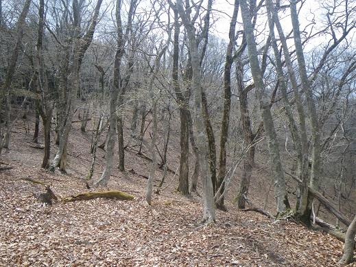 日当たりのよい場所では、少し芽吹いている木も・・標高900Mの尾根