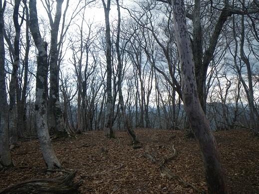 鎌倉谷山頂上付近、芽吹きはまだ