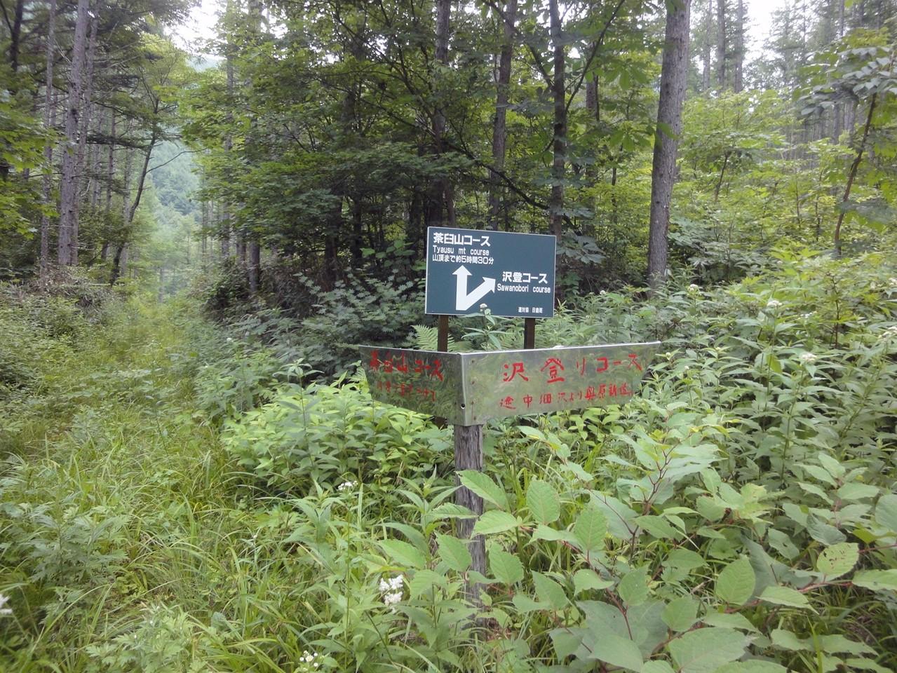さらに分岐を茶臼山コースへ(川渡り気をつけて)