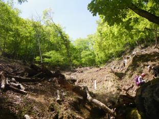 深くえぐれた伐採跡